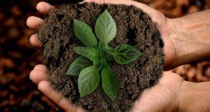 Pflanze mit Erde in der Hand