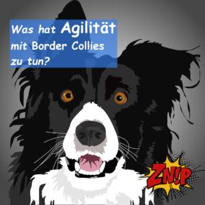 Was hat Agilität mit Border Collies zu tun?