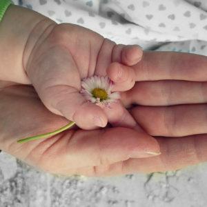 Vertrauen Kinderhand mit Blume in Hand